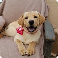 Adopt A Pet :: Autumn (has been adopted) - Burlington, VT