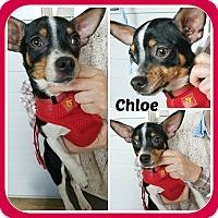Adopt A Pet :: CHLOE - Malvern, AR