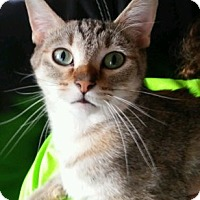 Adopt A Pet :: Sassy - Indianapolis, IN