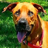 Adopt A Pet :: Charlie - COURTESY POST - N - Huntington, NY