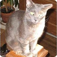 Adopt A Pet :: Jamie & JoJo - Cincinnati, OH