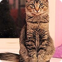 Adopt A Pet :: Wyatt (& Wendy) - Arlington, VA