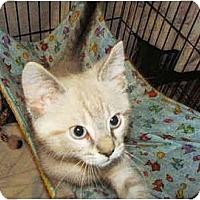 Adopt A Pet :: Juniper - Colmar, PA