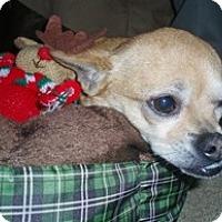 Adopt A Pet :: Ty - Framingham, MA