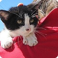 Adopt A Pet :: Crumbles - Los Angeles, CA
