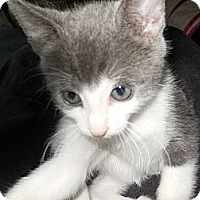 Adopt A Pet :: Mickey - CARVER, MA