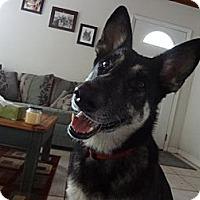 Adopt A Pet :: Phoebe - Green Cove Springs, FL