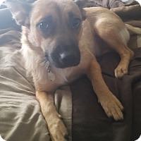 Adopt A Pet :: Baby - Homewood, AL