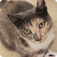 Adopt A Pet :: Terri - Naperville, IL