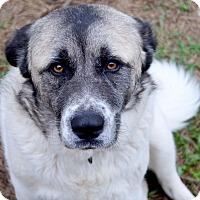 Adopt A Pet :: Maggie May - Huntsville, AL
