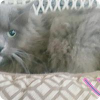 Adopt A Pet :: Lucy - Odessa, TX