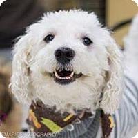 Adopt A Pet :: PJ - Grand Rapids, MI