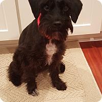 Adopt A Pet :: Lola-Pending Adoption - Laurel, MD