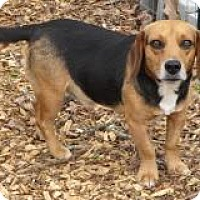 Adopt A Pet :: Snoopy - Irmo, SC