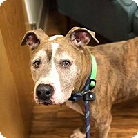 Adopt A Pet :: Benny - Brunswick, OH