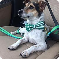 Adopt A Pet :: Oscar - Dallas, TX
