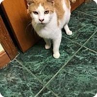 Adopt A Pet :: Tyler - Acushnet, MA