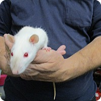 Adopt A Pet :: OLLI and ANDI (FEMALES!) - Philadelphia, PA