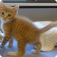 Adopt A Pet :: Dumplin - Manning, SC