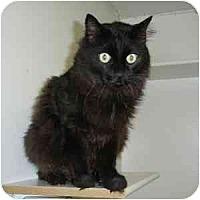 Adopt A Pet :: Big Papi - Phoenix, AZ