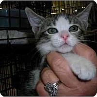 Adopt A Pet :: Fletcher - Riverside, RI
