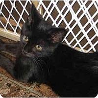Adopt A Pet :: Bear - Davis, CA