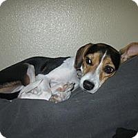 Adopt A Pet :: Ruthie (now Molly) - Phoenix, AZ