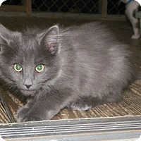 Adopt A Pet :: Jerome - Dover, OH