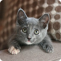 Adopt A Pet :: Peaches - Canoga Park, CA