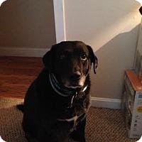 Adopt A Pet :: Brandy - Acushnet, MA