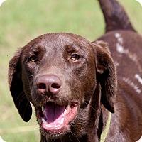 Adopt A Pet :: Sassy - McAllen, TX