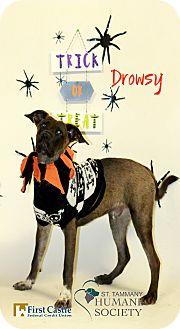 Shepherd (Unknown Type) Mix Puppy for adoption in Covington, Louisiana - Drowsy