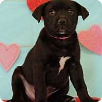 Adopt A Pet :: Holly - Waldorf, MD