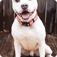 Adopt A Pet :: Sloth - McCalla, AL