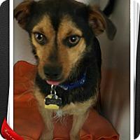 Adopt A Pet :: Mojo - Apache Junction, AZ