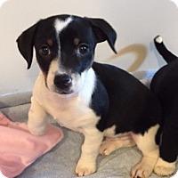 Adopt A Pet :: Chuck - Bernardston, MA