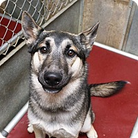 Adopt A Pet :: Burke - Fort Madison, IA