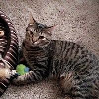 Adopt A Pet :: Lola - Frankfort, IL