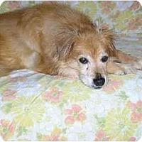 Adopt A Pet :: Bo - Harriman, NY