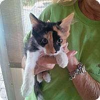 Adopt A Pet :: Lily - Ft. Lauderdale, FL