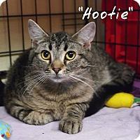 Adopt A Pet :: Hootie - Ocean City, NJ