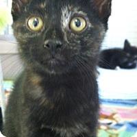 Adopt A Pet :: Pancake - Trevose, PA