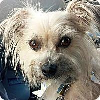 Adopt A Pet :: Luciana - Seattle, WA