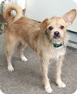 Terrier (Unknown Type, Small) Mix Dog for adoption in Woonsocket, Rhode Island - Winchester - MEET ME