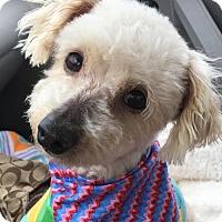 Adopt A Pet :: Fisher - McKinney, TX