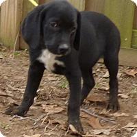 Adopt A Pet :: Kiki - Bedminster, NJ