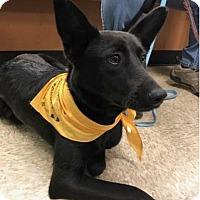 Adopt A Pet :: Duffy (Annie Litter) - Charlotte, NC