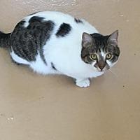 Adopt A Pet :: Sneaky Pete - Alpharetta, GA