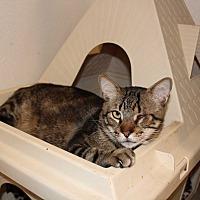 Adopt A Pet :: Little Bit - Boca Raton, FL