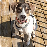 Adopt A Pet :: Cookie Playful with dogs! - Ada, MN